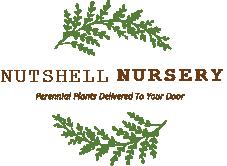 Nutshell Nursery